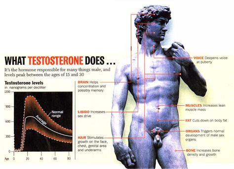 睪固酮的正面效應